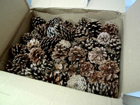 Lot 10333 BOX OF A SIGNIFICANT QUANTITY OF ASSORTED PINECONES