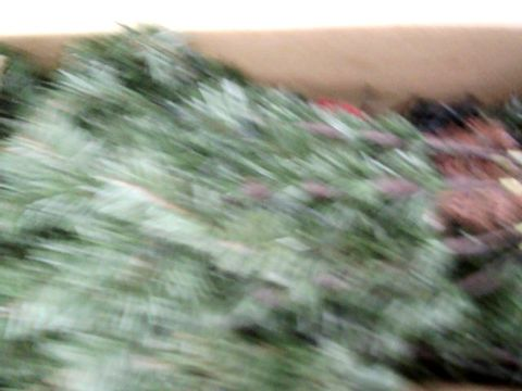 Lot 103 WERCHRISTMAS PRE-LIT SPRUCE MULTI-FUNCTION 7FT CHRISTMAS TREE