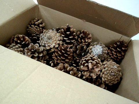 Lot 7562 BOX OF FUR CONES